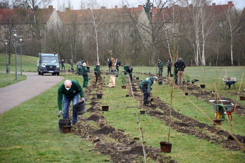 Alle halfen tatkräftig bei der Baumpflanzaktion mit