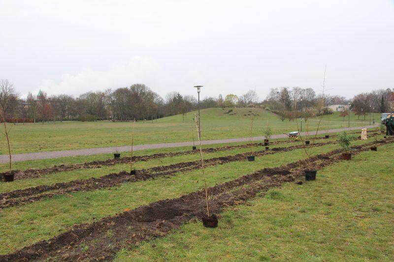 Diese Bäume warteten noch darauf, eingepflanzt zu werden