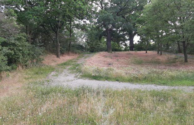 Umgestaltung Grünfläche Schützenstraße