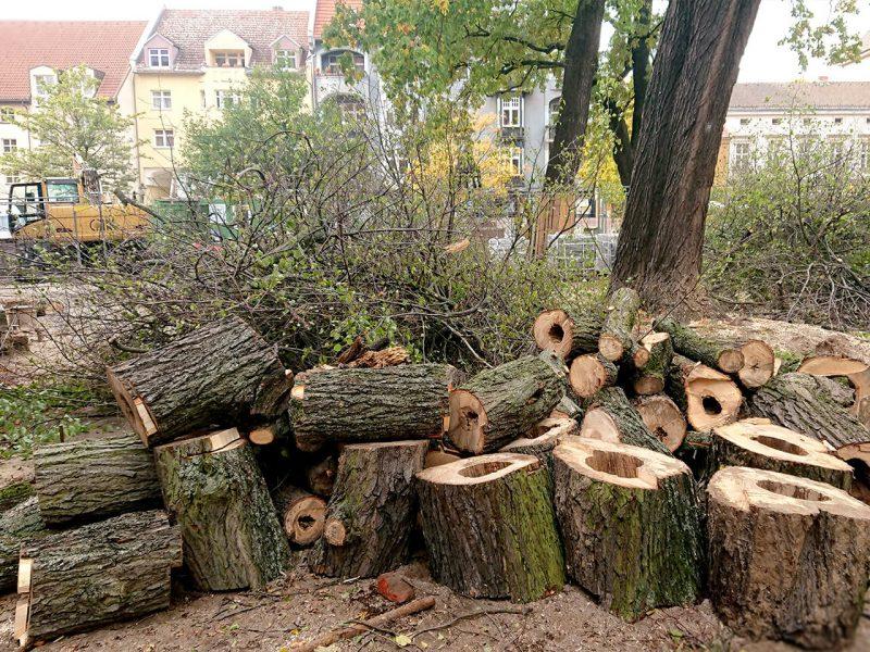Baumschnitt vor dem Reformationsplatz